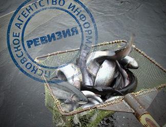 Ревизия: Расти рыбка